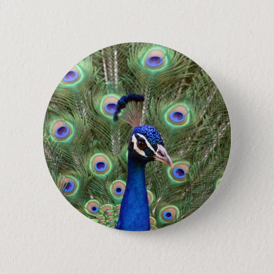 Beautiful peacock with its colourful tail opened 6 cm round badge