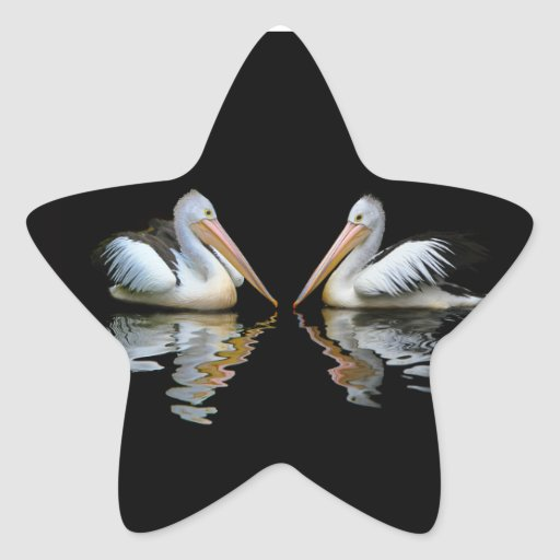 Beautiful pelicans reflection on black background sticker