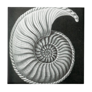 Beautiful pencil drawing of Amaltheus ammonite Tile