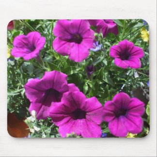 Beautiful Petunias in Bed of Colour Mouse Mat