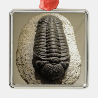 Beautiful Phacops trilobite fossil photo Christmas Ornament