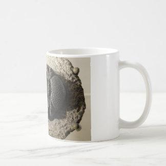 Beautiful Phacops trilobite fossil photo Mug