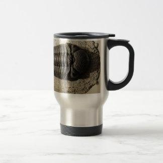 Beautiful Phacops trilobite fossil photo Travel Mug