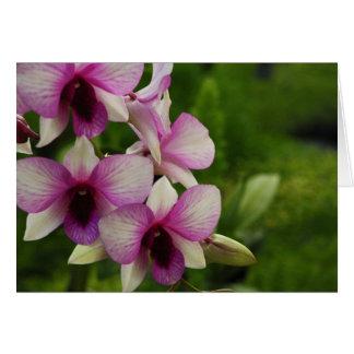 Beautiful Phalaenopsis Card
