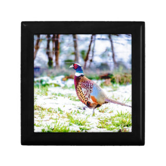 Beautiful Pheasant On Snow Covered Grass Gift Box