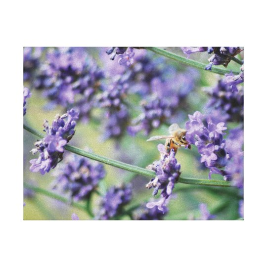 Beautiful photo purple lavender flowers and bee canvas