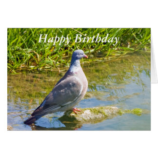 Beautiful pigeon bir happy birthday greetings card