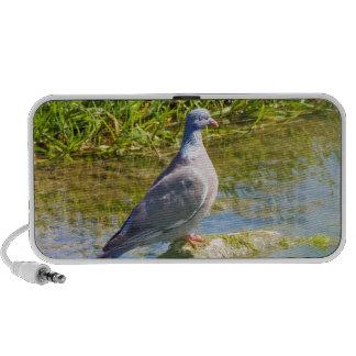 Beautiful pigeon bird doodle speakers