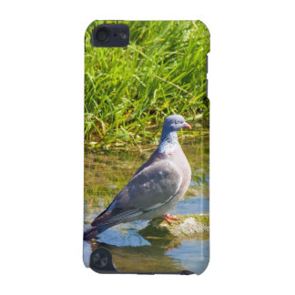 Beautiful pigeon bird photo ipod touch 4G case iPod Touch (5th Generation) Case