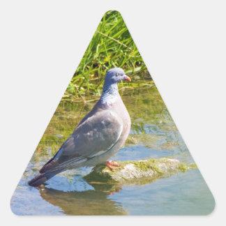 Beautiful pigeon bird photo portrait stickers