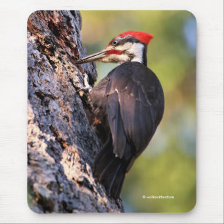 Beautiful Pileated Woodpecker on the Tree Mouse Mat