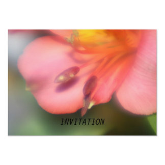 Beautiful Pink Alstroemeria Flower  INVITATION