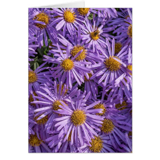 Beautiful Pink Aster Greeting Card