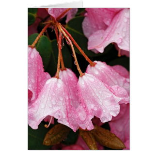 Beautiful Pink Azalea Greeting Card