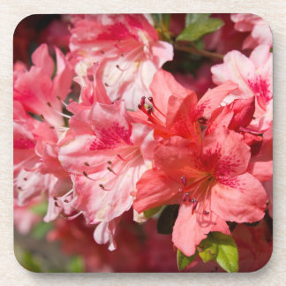 Beautiful Pink Azaleas Drink Coaster