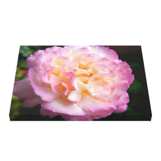 Beautiful Pink Blooming Rose Canvas Print