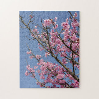 Beautiful pink cherry blossoms and blue sky puzzles