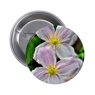 Beautiful pink clematis flowers pinback button
