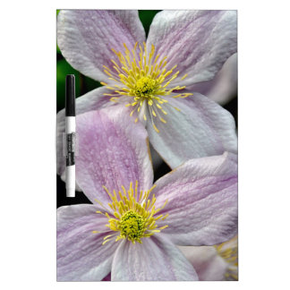 Beautiful pink clematis flowers Dry-Erase whiteboards