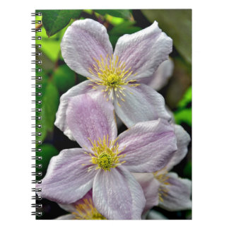 Beautiful pink clematis flowers notebooks