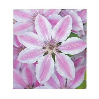 Beautiful pink clematis flowers note pads