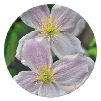 Beautiful pink clematis flowers plates