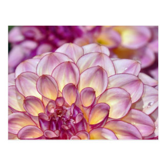 Beautiful pink dahlia flowers postcard