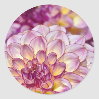 Beautiful pink dahlia flowers round sticker