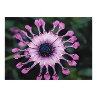 Beautiful pink daisy flower 13 cm x 18 cm invitation card