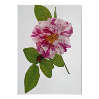 Beautiful Pink flower 13 Cm X 18 Cm Invitation Card