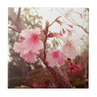 Beautiful pink flowers cherry sakura blossoms tiles