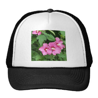Beautiful pink flowers Rose of Sharon Hat