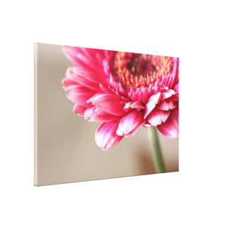 Beautiful pink gerbera on beige canvas print