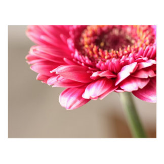 Beautiful pink gerbera on beige postcard