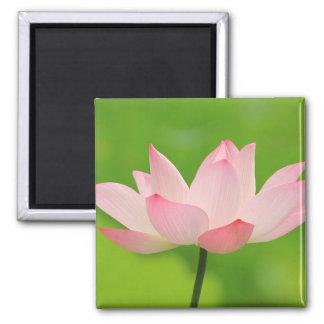 Beautiful pink lotus flower square magnet
