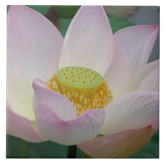 Beautiful pink lotus flower ceramic tile