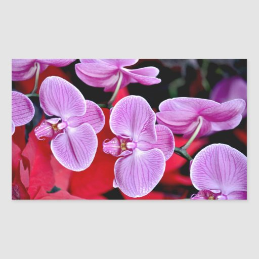 Beautiful pink moth orchids stickers