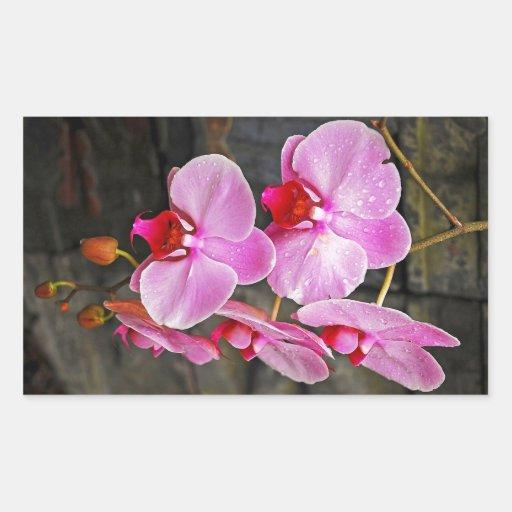 Beautiful pink moth orchids rectangular stickers