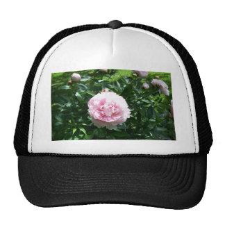 Beautiful pink peony flowers hat