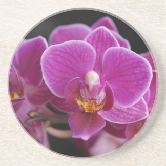 Beautiful Pink Phalaenopsis Orchid Blooming Coaster