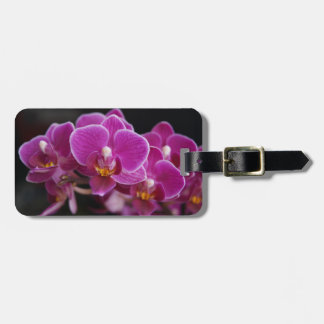 Beautiful Pink Phalaenopsis Orchid Blooming Luggage Tag