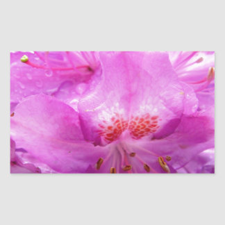 Beautiful Pink Rhododendron Pontica Rectangle Sticker