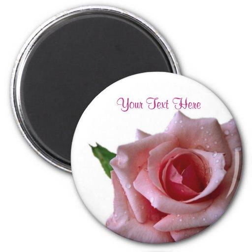 Beautiful Pink Rose Bud Design Magnets