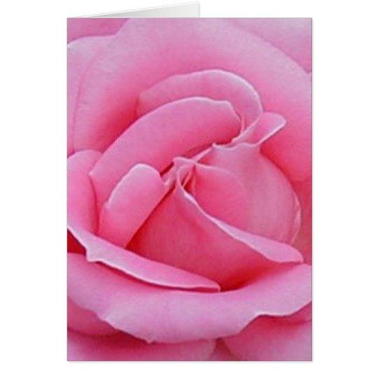 beautiful pink rose card