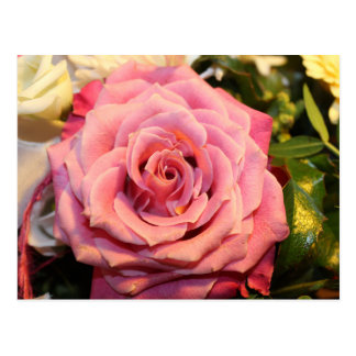 Beautiful pink rose post cards