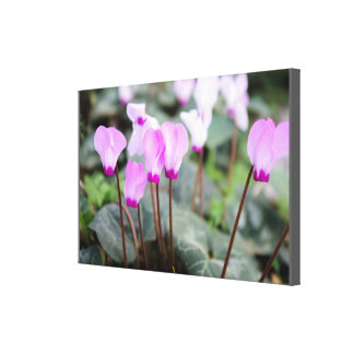 Beautiful Pink Shower Party Blossom Wedding Love Stretched Canvas Print