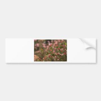 Beautiful Pink Spring Blooming Azaleas Pentanthera Bumper Sticker