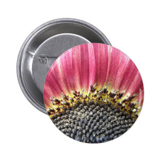 Beautiful Pink Sunflower Button