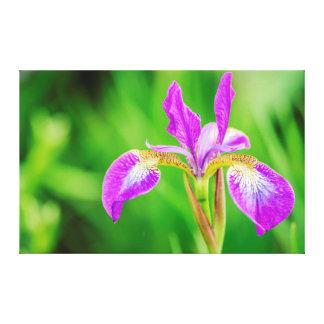 Beautiful Poetic Violet Purple Flower Canvas