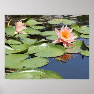 Beautiful Pond Print - Poster